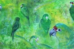 Green parrots / Perroquets verts