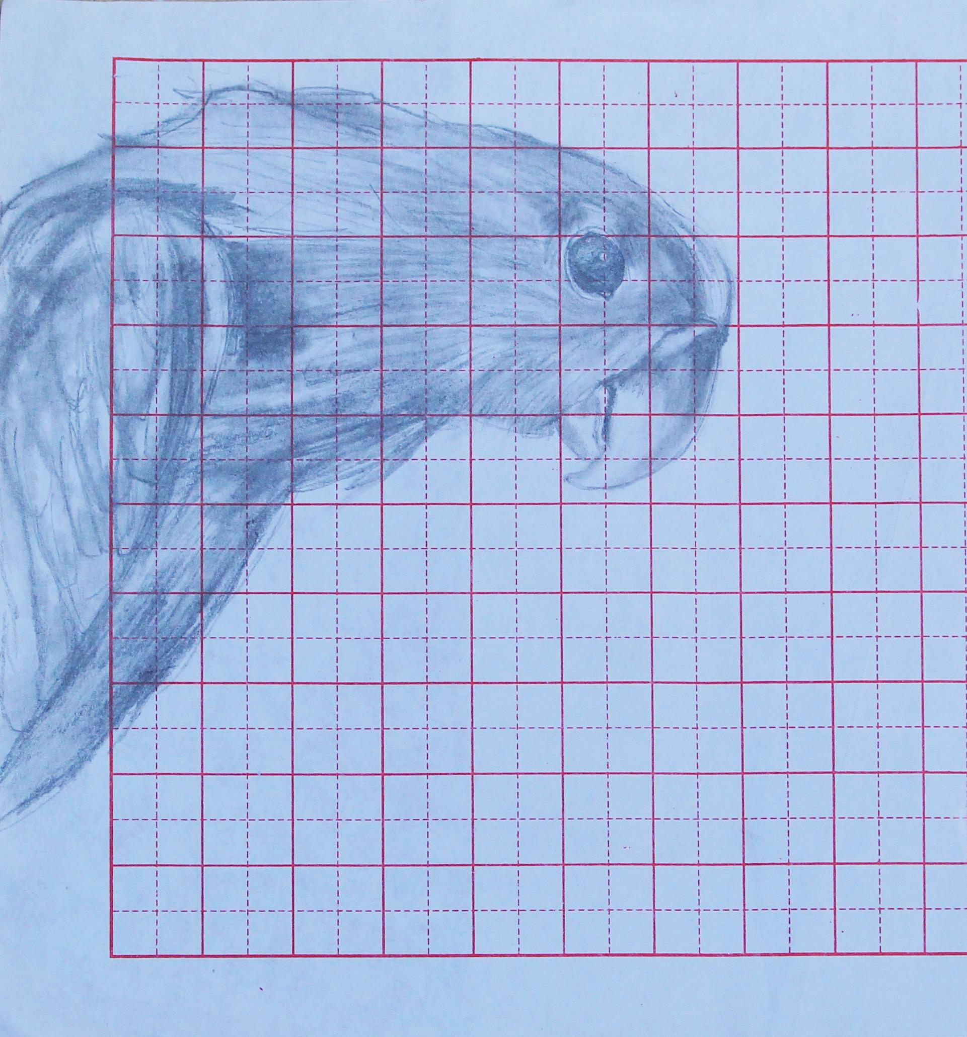 Sketchbook- Parrot // Carnet de croquis - Perroquet