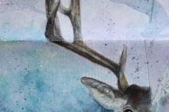 Sketchbook - Elk // Carnet de croquis - Élan